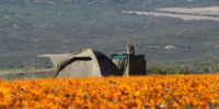 flower-camp-tent