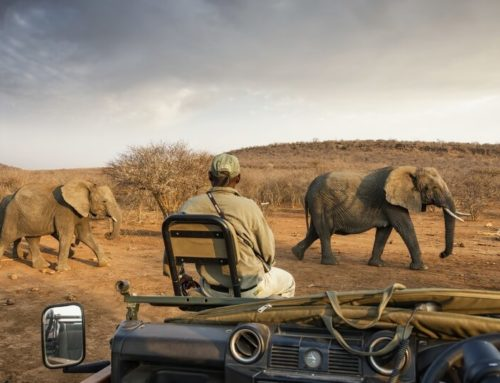 5 ways to see Africa in 5 days this Eid